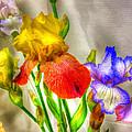 Iris #18 by John Derby