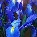 Iris 2 by Megan Cohen