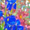 Iris 22 by Pamela Cooper