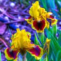 Iris #58 by John Derby