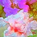 Iris 60 by Pamela Cooper