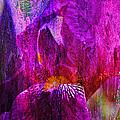 Iris Abstract by J Larry Walker