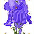 Iris And Old Lace by Anne Norskog