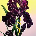 Iris by Andrew Petras