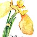 Iris Blooms  by Sherry Harradence