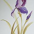 Iris by Brenda Salamone