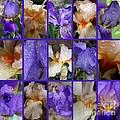 Iris Collage by Carol Groenen
