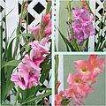 Iris Collage by Miriam Shaw