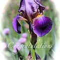 Iris Congratulations Card by Carol Groenen