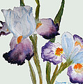 Iris by Donna Walsh