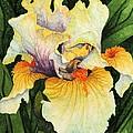 Iris Elegance by Barbara Jewell