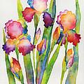 Iris Elegance by Hailey E Herrera