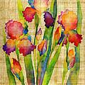 Iris Elegance On Yellow by Hailey E Herrera