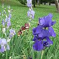 Iris Entrance by Iris Prints
