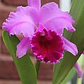 Iris Flower by Baruch Y Lebovits