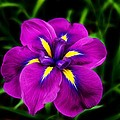 Iris Flower by FL collection