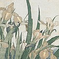 Iris Flowers and Grasshopper by Hokusai
