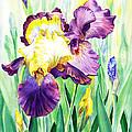 Iris Flowers Garden by Irina Sztukowski