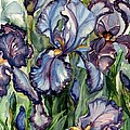 Iris Garden by Barbara Jewell