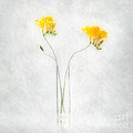 Iris In Glass Vase by Malcolm Bumstead