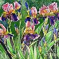 Iris Inspiration by Zaira Dzhaubaeva