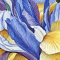 Iris by Jane Girardot