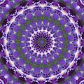 Iris Kaleidoscope  by Denise Beverly