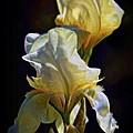 Iris by Patrick Witz