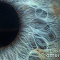 Iris by Paul Whitten