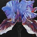 Iris by Susan Bruner