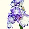 Iris by Todd Hostetter