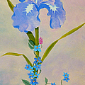 Iris With Forget Me Nots by Teresa Ascone