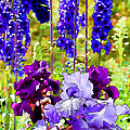 Irises And Delphinium In The Garden by Peggy Collins