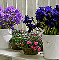 Irises And Impatiens by Gary Olsen-Hasek