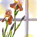 Irises In The Window by Kip DeVore
