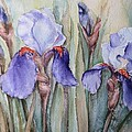 Irises by Olga