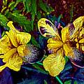 Irises by William Sargent