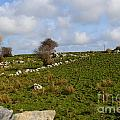 Irish Farms And Fields by DejaVu Designs