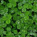 Irish Spring by Photography by Tiwago