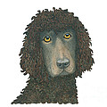 Irish Water Spaniel by Yvonne Johnstone