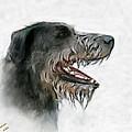 Irish Wolfhound by Arne Hansen
