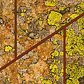 Iron And Lichen by Gene Norris