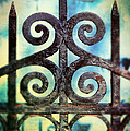 Iron Gate Detail by Jill Battaglia