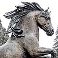 Iron Horse by Regina Arnold
