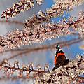 Irresistible Blossom by Gill Billington