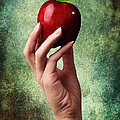 Irresistible Red Apple by Cindy Singleton