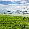 Irrigation On Saskatchewan Farm by Elena Elisseeva