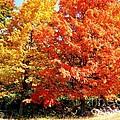 Is Autumn Already by Cristina Stefan
