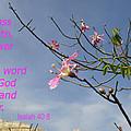 Isaiah 40 8 by Nina Fosdick