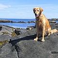 Island Dog by Elizabeth Dow